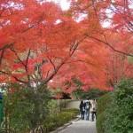 Kyoto Sagano 2